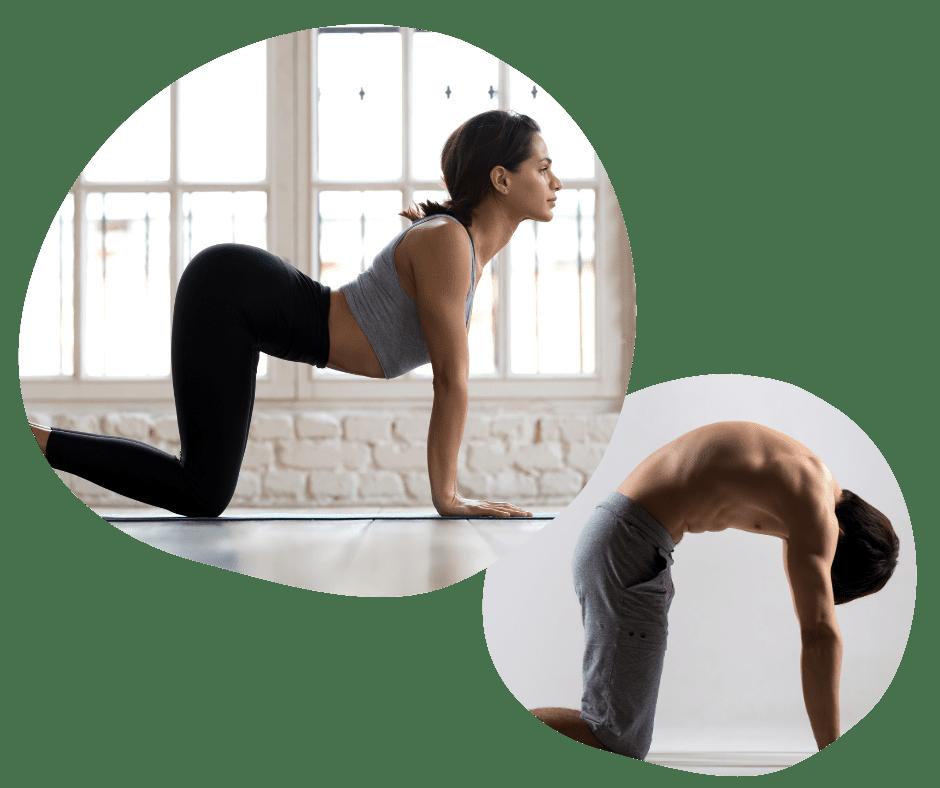 Kat og Ko stillingen i yoga